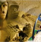Istoria teoriei evoluționismului