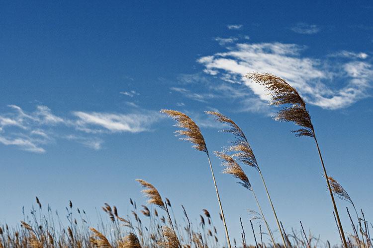 Despre vânt în Coran