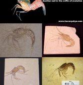 Arhivele fosilifere resping evoluţionismul – 1