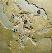 Speculatii despre Arcaoeopteryx