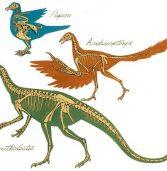 O altă presupusă formă tranziţională: Archaeopteryx