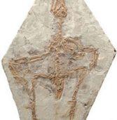 Archaeopteryx şi alte fosile de păsări