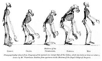 Scenariul evoluţiei omului