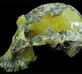 Australopithecus: o specie de maimuţe