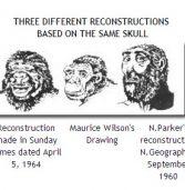 Evolutionistii despre fosile